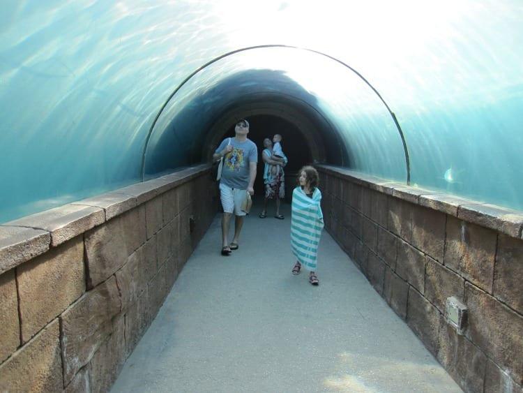 Predator tunnel at the Altantis Bahamas