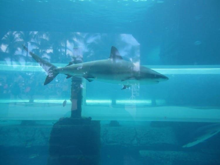 Sharks at the Atlantis Bahamas from Atlantis Bahamas Reviews from We3Travel.com