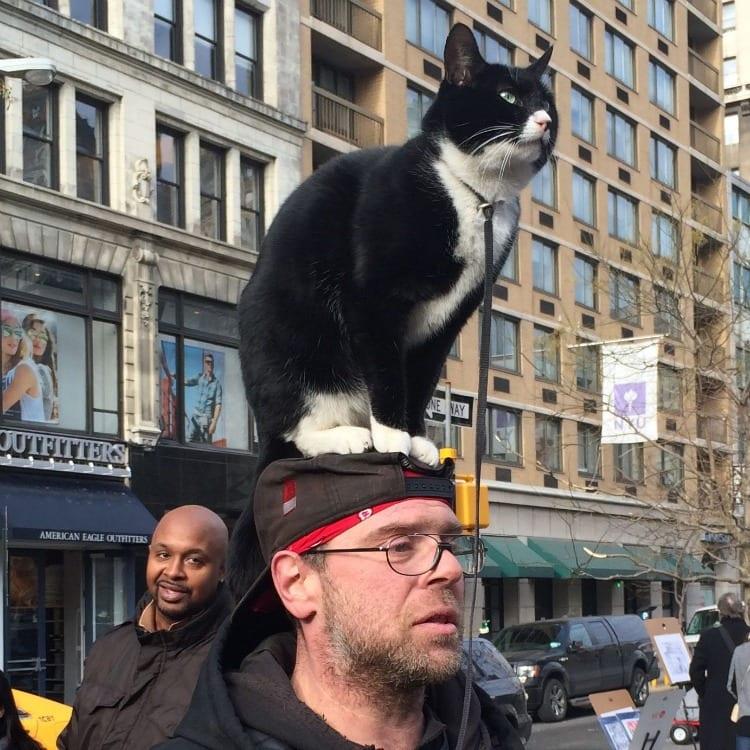 Cat on head