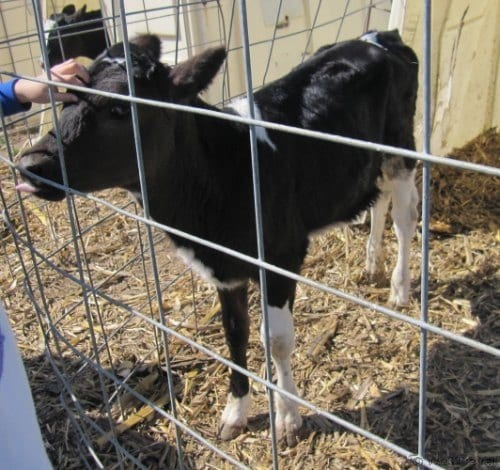 Visit an Amish Farm - 10 Things to do in Lancaster, PA with Kids