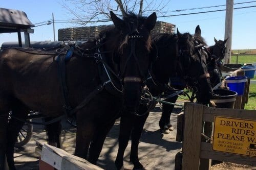 Aaron and Jessica's Buggy Rides - 10 Things to do in Lancaster, PA with Kids