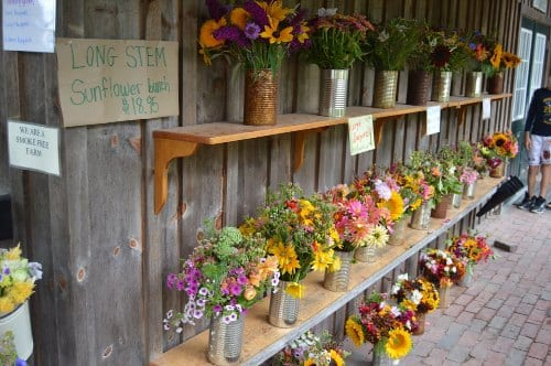 Morning Glory Farm - What to do on Martha's Vineyard