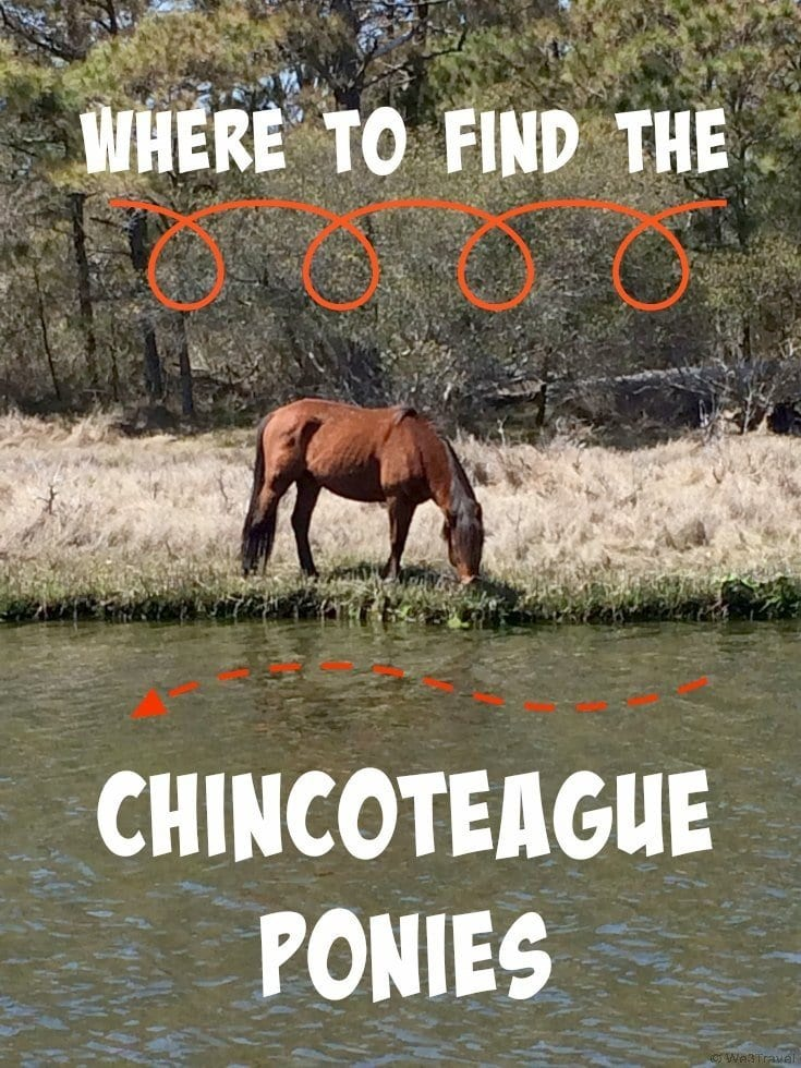 Where to find the Chincoteague Where to find the Chincoteague Ponies