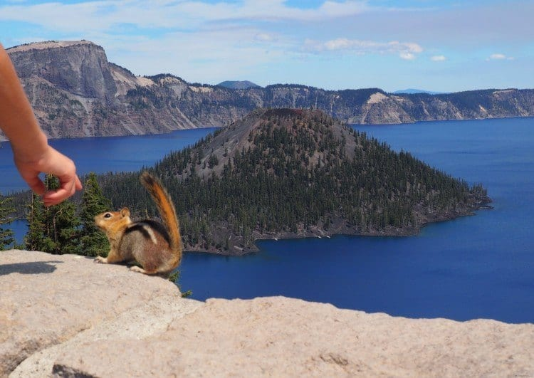 Ground squirrel at Crater Lake Oregon