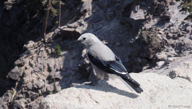 Bird watching at Crater Lake Oregon