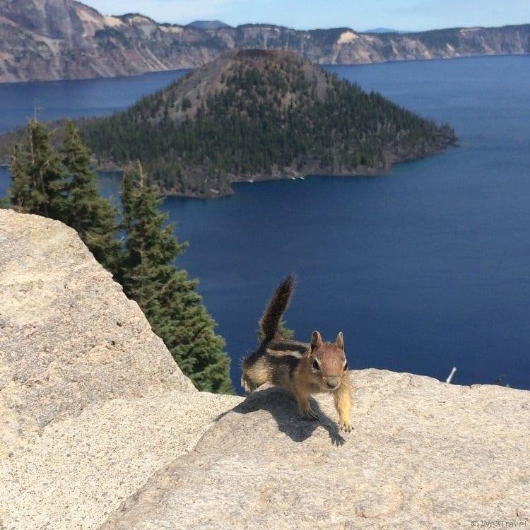Ground Squirrel at Crater Lake