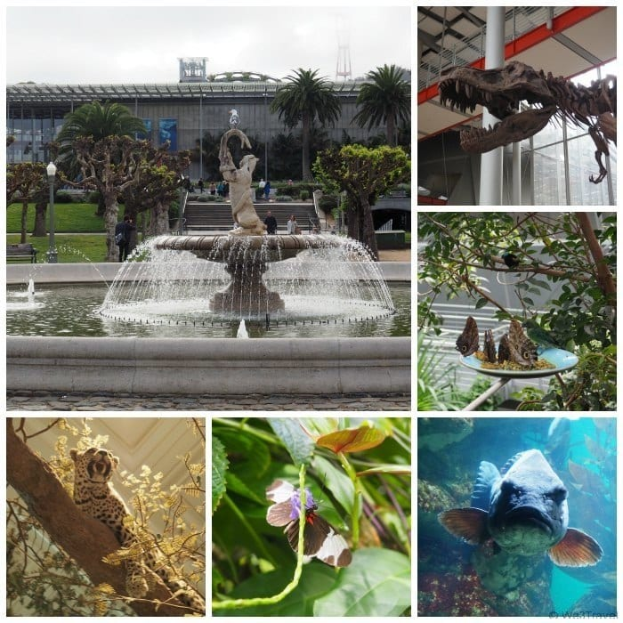 2 Days in San Francisco with kids: A Sample Itinerary. Include a visit to the California Academy of Sciences.