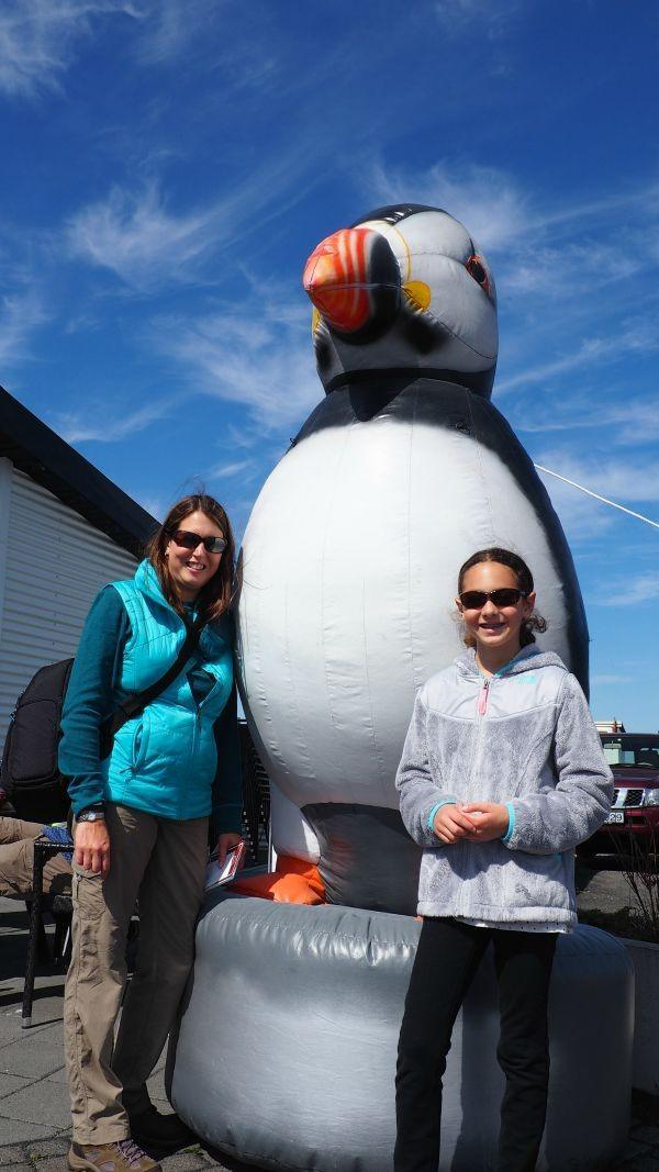 Puffin watching tours in Iceland