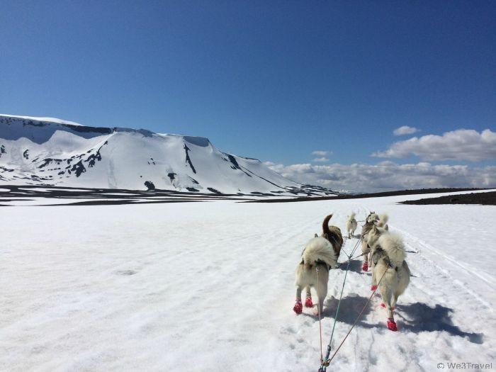 Dog sledding on a glacier
