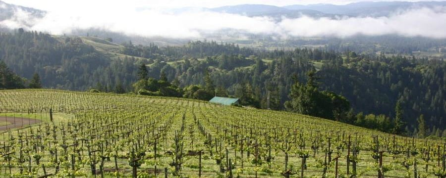 11 Tips for Travel with Kids to Wine Country