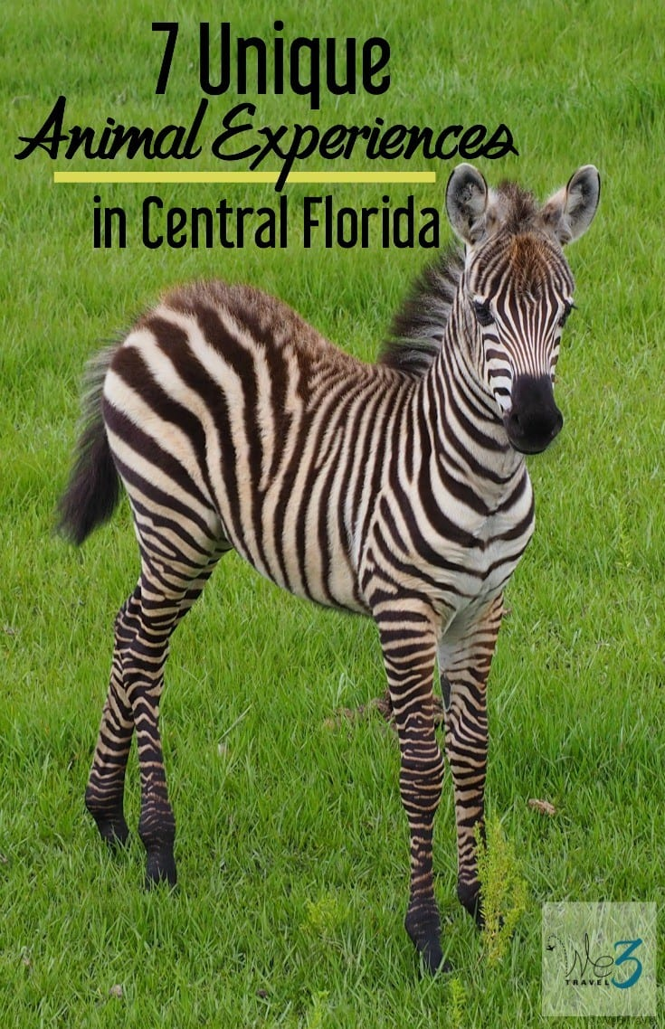 7 Unique Animal Experiences in Florida including Orlando, Central Florida, the Space Coast and South Florida -- from feeding lemurs to petting penguins.