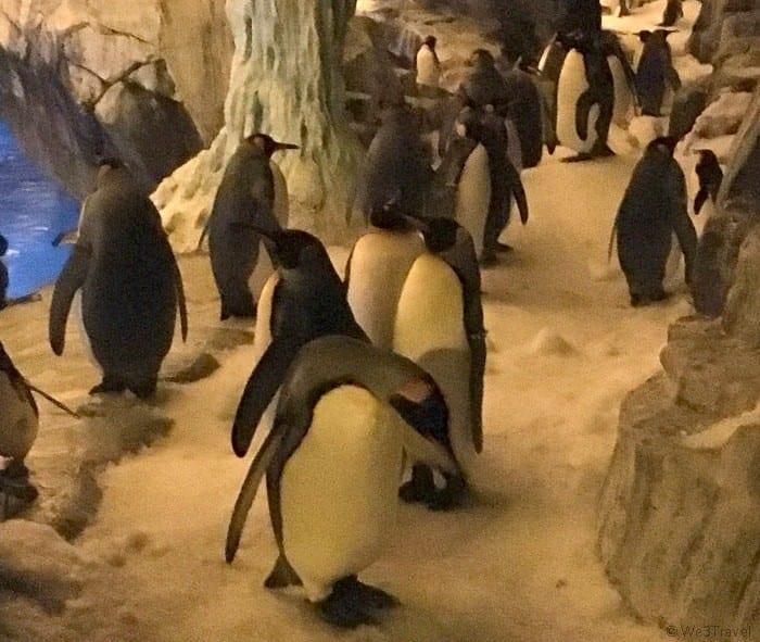 Penguin encounters at Seaworld