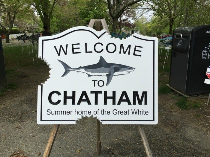 Chatham home to the Great White