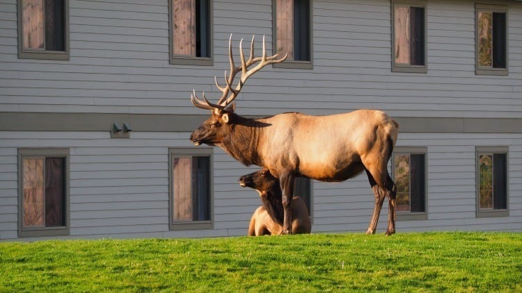 Tips for planning a trip to Yellowstone - Mammoth Springs