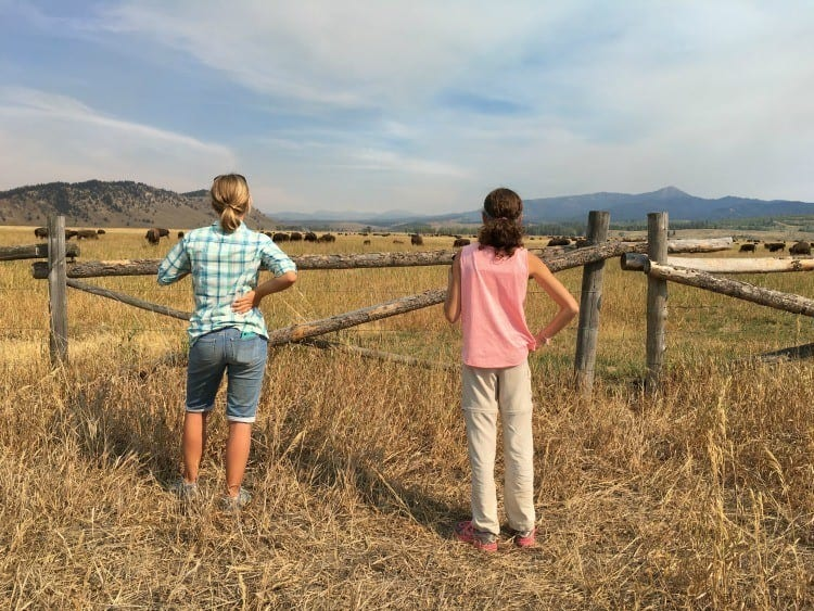 Elk Flats Grand Teton National Park