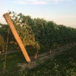 Newport Vineyards vines