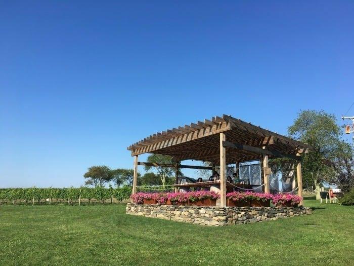 Sakkonett vineyards