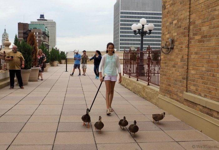 Peabody Memphis ducks on roof