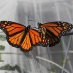 Airlie Gardens butterfly garden