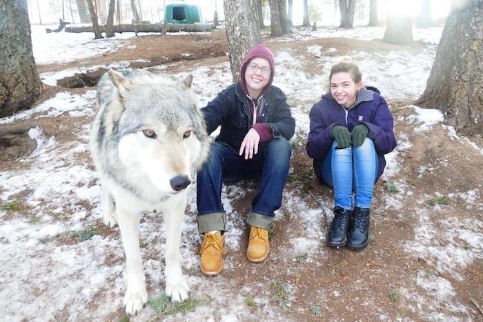Colorado springs wolf and wildlife center