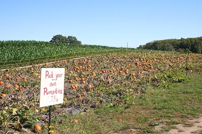 pumpkin patches in Rhode Island Dame farm