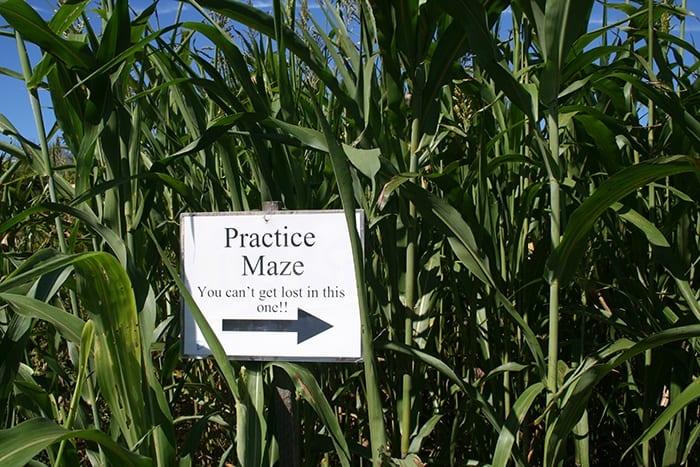 Salisbury Farm Corn Maze RI