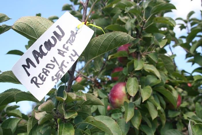 Apple orchards in Rhode Island Barden Farm