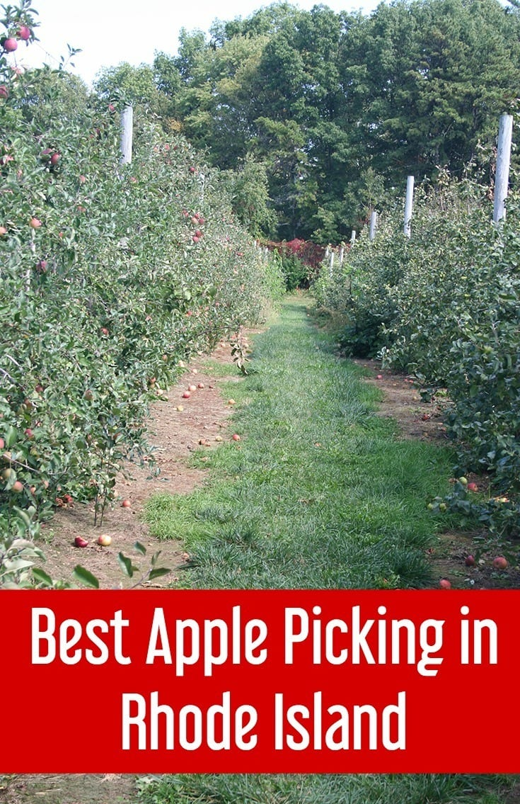 Best apple orchards for apple picking in Rhode Island