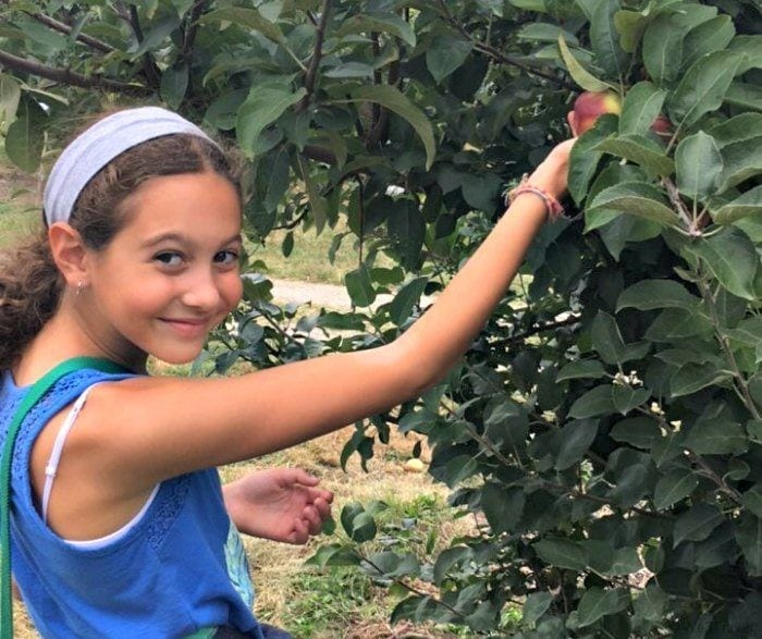 apple picking in RI