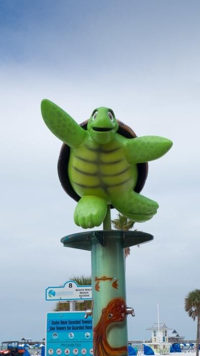 Clearwater Beach turtle