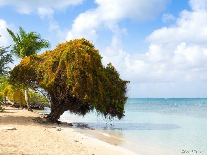Martinique vacation Club Med Buccaneer's Creek