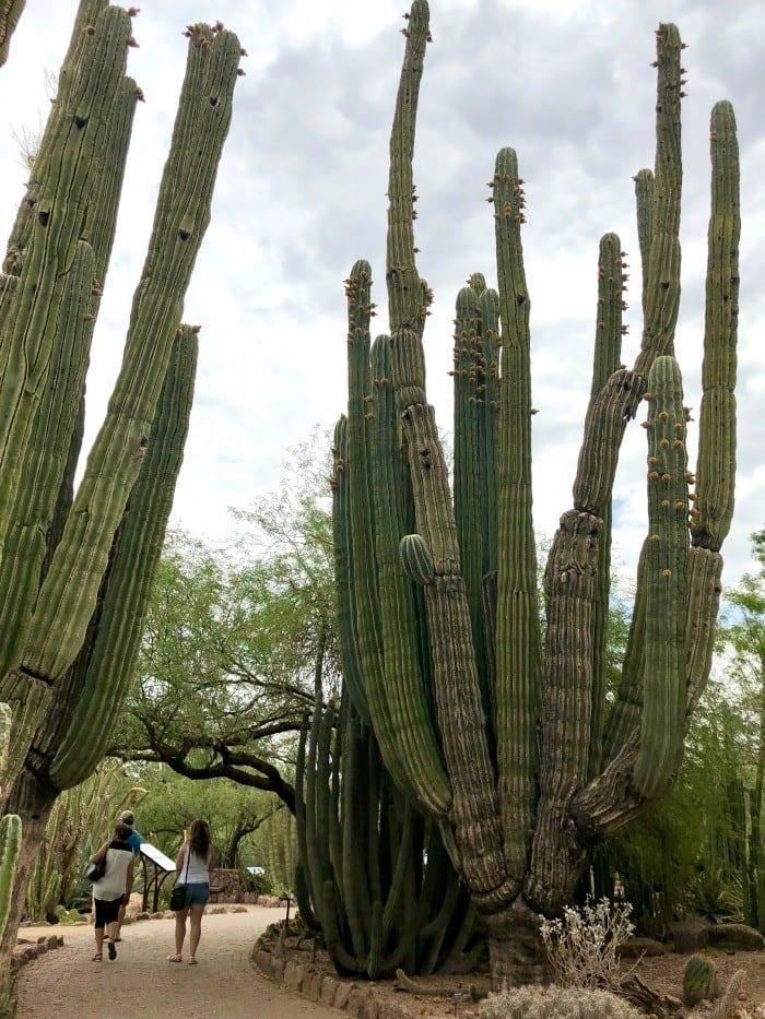 Scottsdale Desert Botanical Gardens