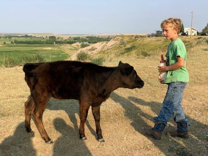Circle view ranch calf