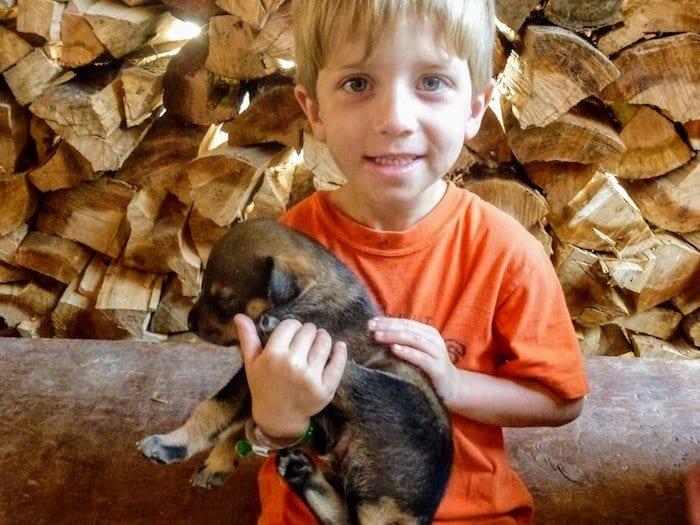 Holding a sled dog
