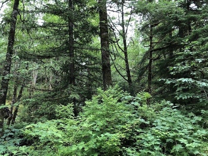 Ketchikan hike