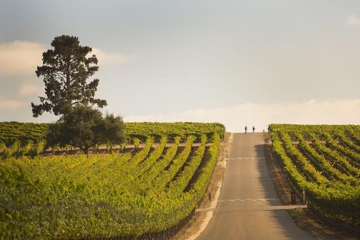 Near Vineyard cycling