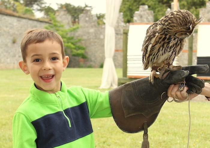 Adare falconry