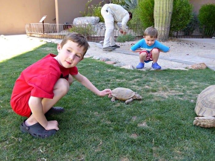 Ritz Carlton Dove Mountain tortoises