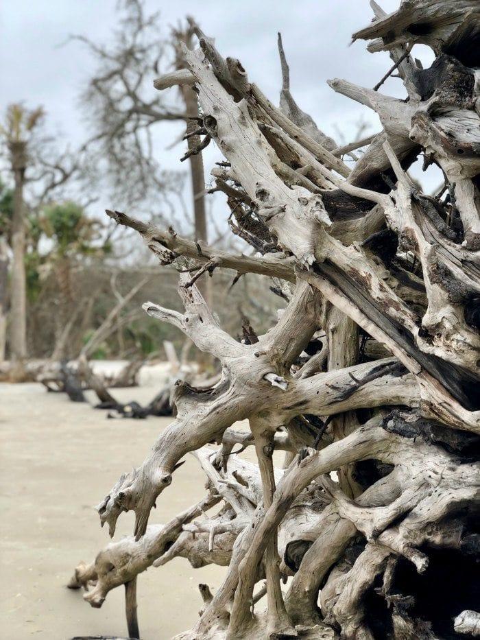 Driftwood beach close up