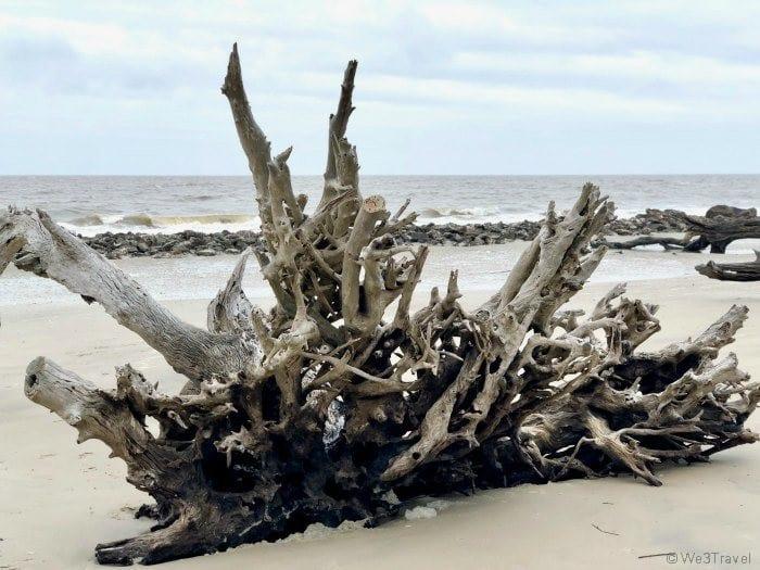 Jekyll Island Driftwood Beach tree