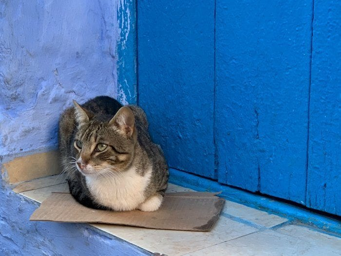 cat on blue step
