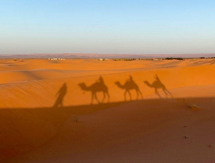 Camel shadows on the dunes