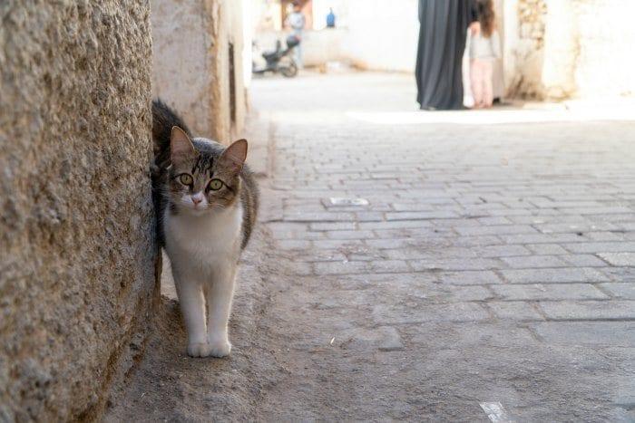 cat in the Fes medina
