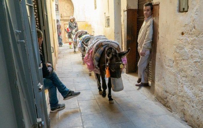 donkeys in the medina in Fes