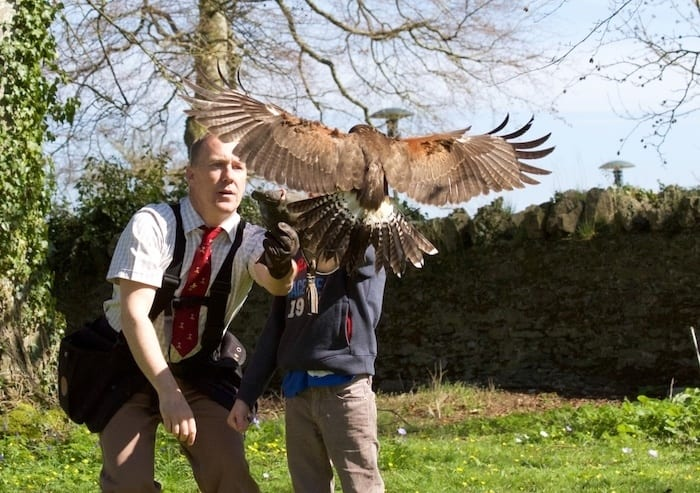 Falconry at Mount Juliet Estate