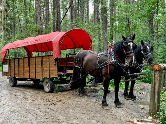 Cowboy cookout horse and wagon