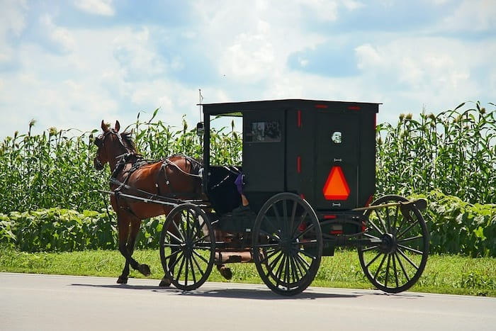 Amish horse and buggy in front of corn field