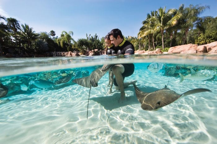 Dad and daughter in water with Stingrays