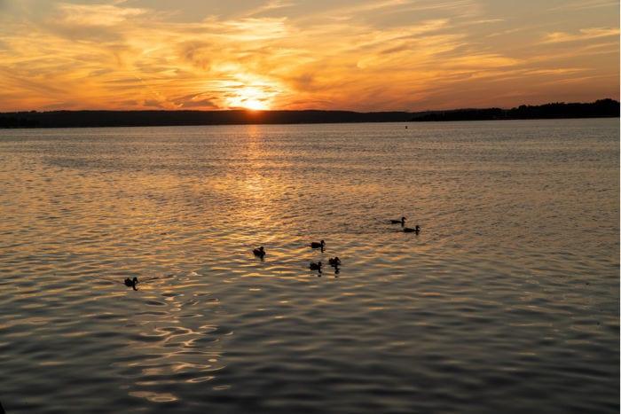 Sunset and ducks on Lake Chautauqua