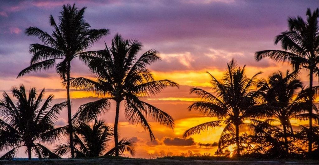 Hawaiian sunset with palm trees in the foreground